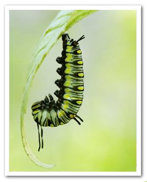 Faculty 1: The Secular Self - Caterpillar